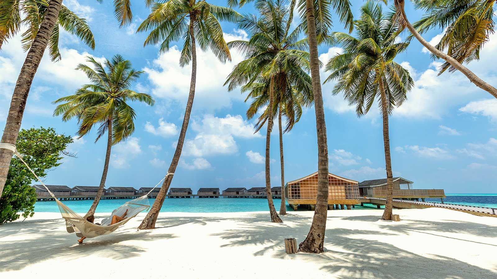 Palm trees at Kudadoo Maldives Private Island